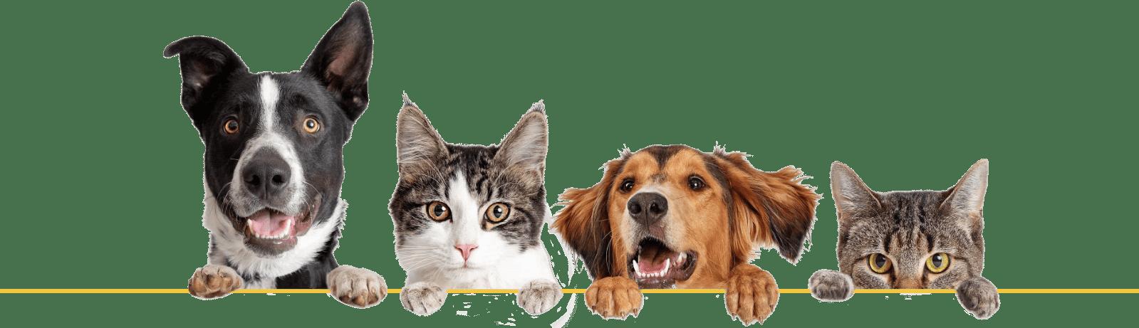 Dog Cat Banner Border Less